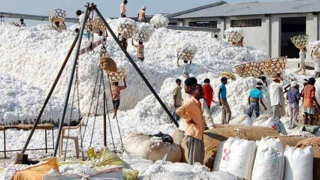 Cotton prices rose steadily, buying up rs. 5100