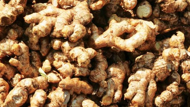 ginger Rs 2600 to 5000 per quintal in Jalgaon