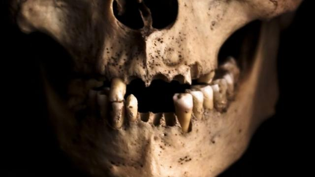Human ancestors may have eaten hard plant tissues without damaging teeth