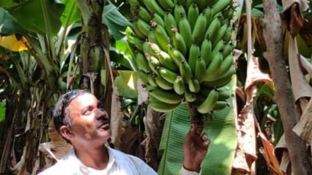 Banana growers hit 'lockdown' in Nanded, Parbhani, Hingoli district