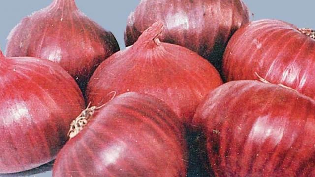 In Kolhapur, farmers closed onion deals