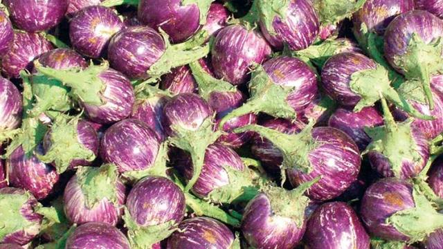 Cabbage in Aurangabad, Eggplant, ginger rates stable