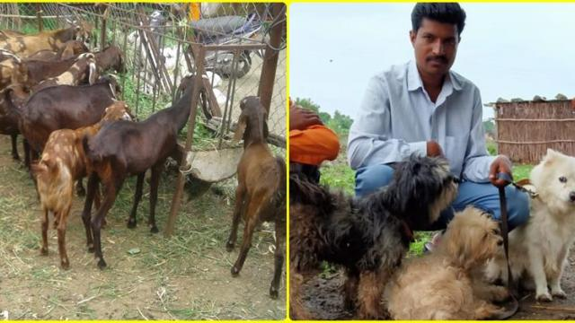Santosh Agra's goat rearing and dogs rearing