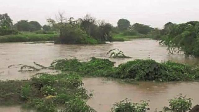 Damage to soybean, tur, cotton in  Parbhani, Hingoli
