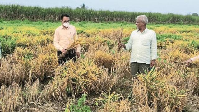 70 percente crop inspection complete in kadegao taluka