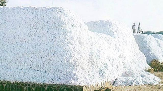 Disruption in cotton procurement due to lack of storage in Khandesh