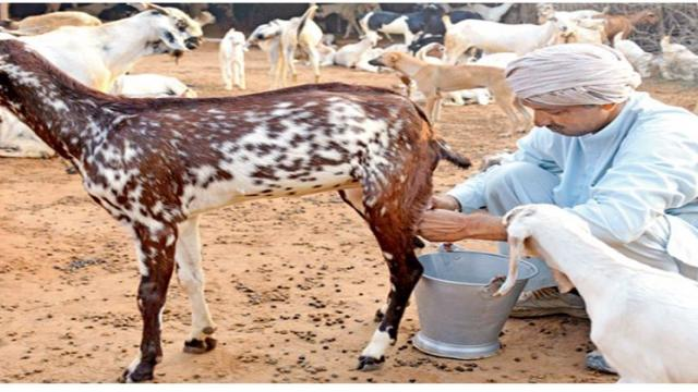 Health benefits of goat milk