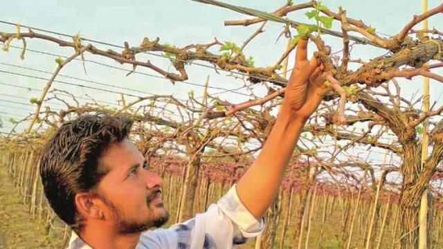 Expenditure on grapes in Mathpimpalgaon-Golapangari, income equation did not match