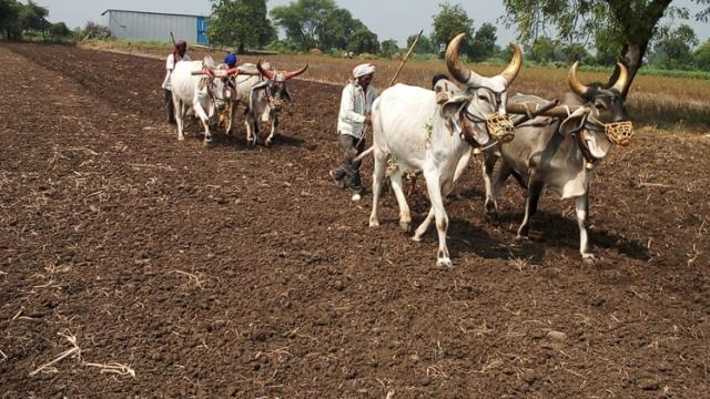 Kharif in Satara district Preparations for the season begin