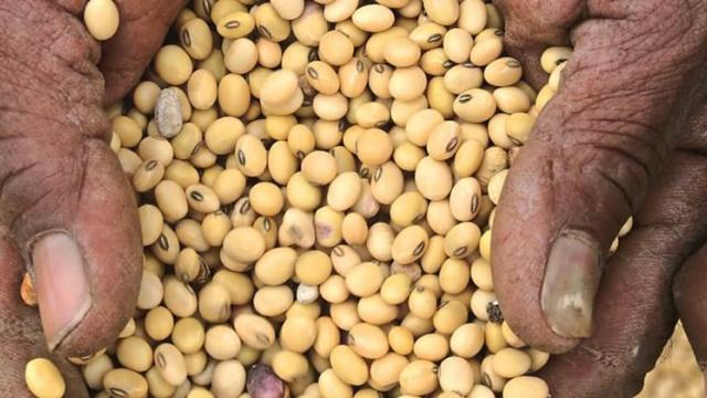 Only 27% of the country's soybean harvest