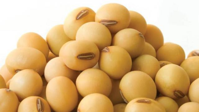510 complaints of inferior soybean seeds in Solapur district