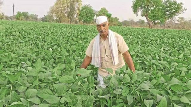 Moving towards the final stage of summer soybean experiment in Jalna district