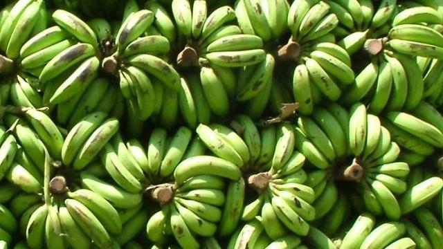 Record price of Rs. 1600 for banana