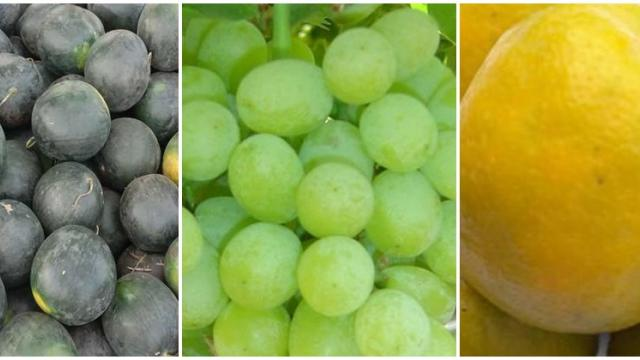 Fruit arrivals increased in Mumbai Market Committee