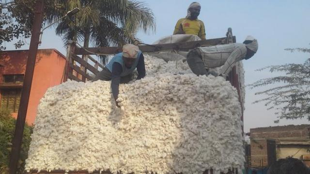 Cotton procurement started at Kaladgaon, Naigaon
