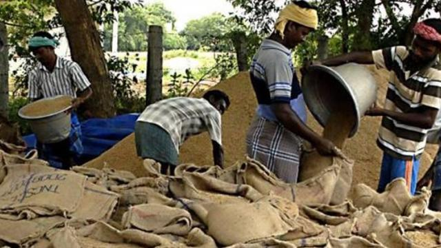 Purchase of 37,000 quintals of paddy in Sindhudurg district