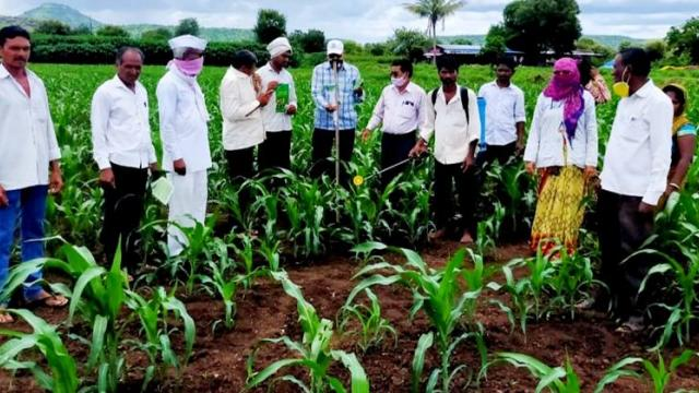 In Dhule district, the Department of Agriculture moved for military larvae survey