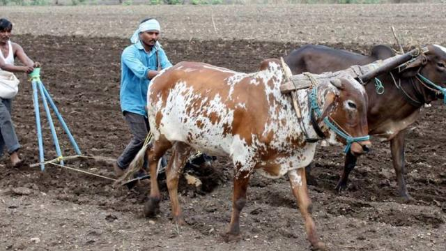 Crisis of wasted sowing in Sangli district due to lack of rains