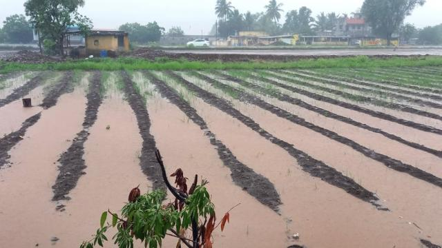 Estimated loss on 18,000 hectares in Pune district