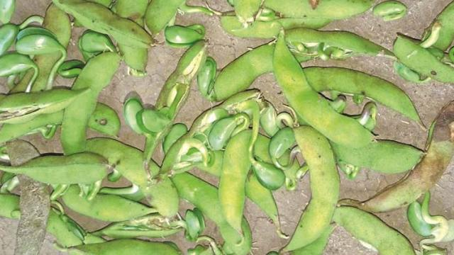 Soybean growers should be compensated; Otherwise movement