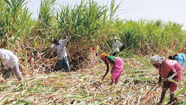 farmers suffering due to Sugar factories closed in Attapadi taluka