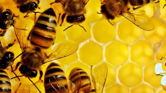 Take advantage of the beekeeping scheme