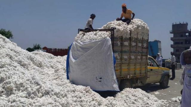 Lack of space in Nanded district Cotton purchase stopped at two centers