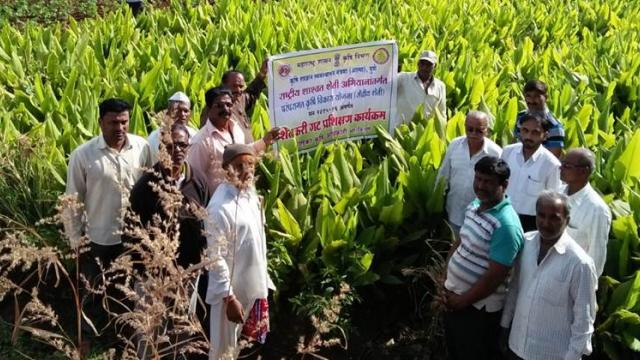 Training programs on turmeric have also been conducted in the village