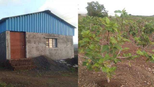 pack house and fig cultivation