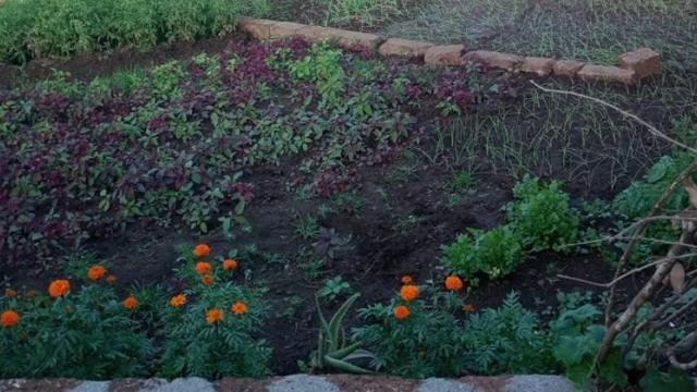Cultivation of various vegetables in the backyard