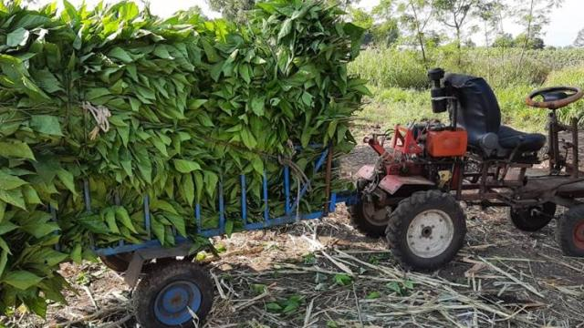 facility made in vehicle for transporation of leaves