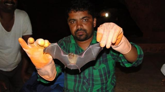 Dr. Gaikwad While giving information about Bats,