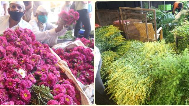 The arrival of aster and various fillers.