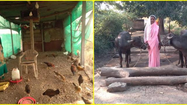 Poultry and buffalo farming