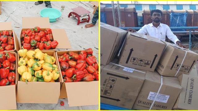 packed boxes of colored chillis sent to another state by train