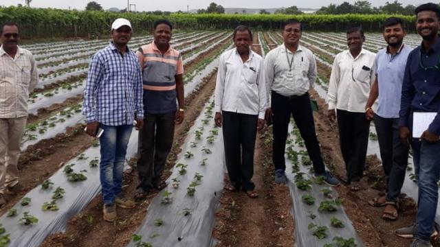 Experts visited the strawberries plot