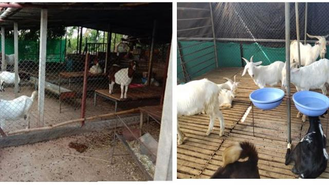 Seating and water facilities for goats