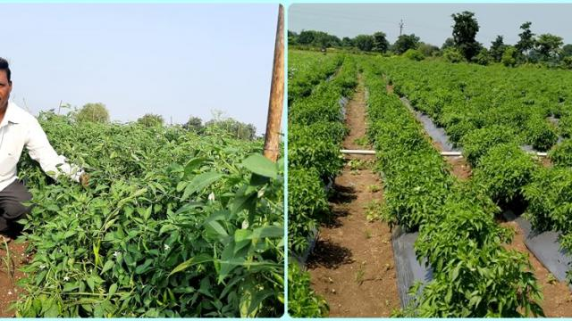 Barde family recovered from mixed cropping system