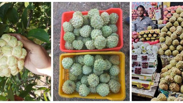 less water custard apple production