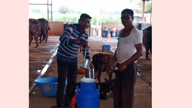 direct selling of milk from buffalo farm