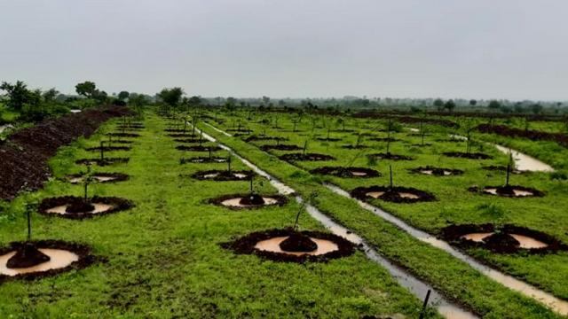Attractive photo of tree planting done by Gorva villagers