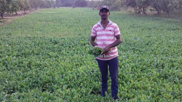 Area of vegetable cultivation.
