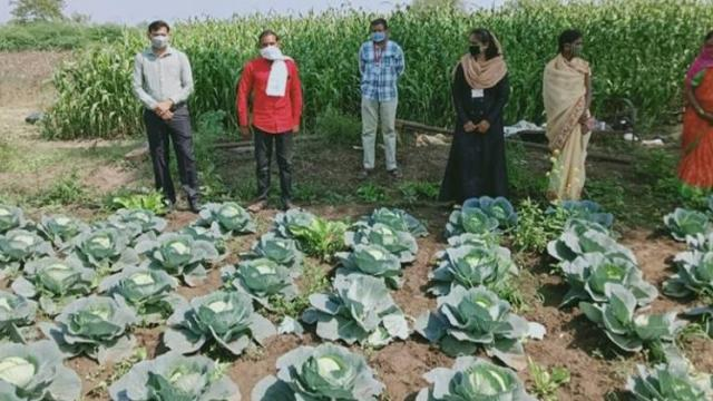 Women's groups cultivate vegetables.