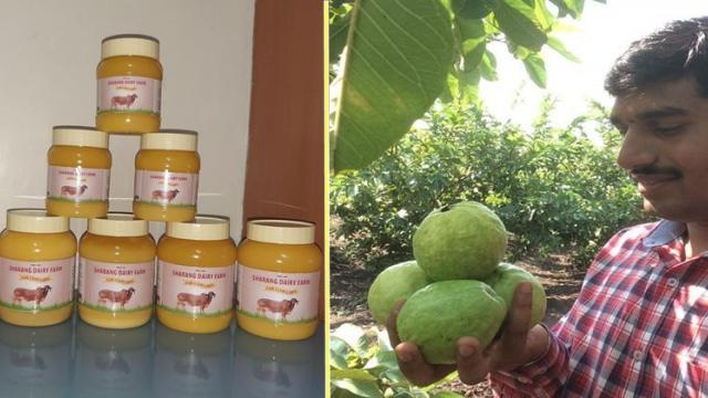 Quality production of gir cow ghee and guava