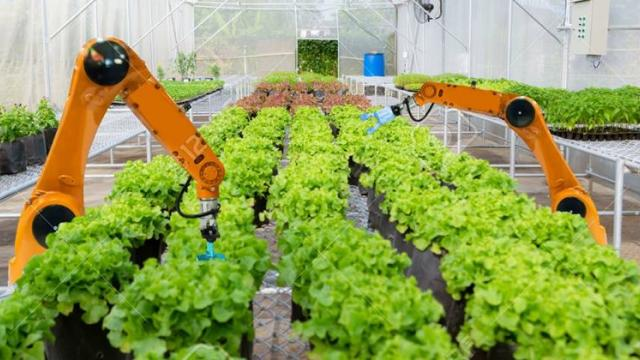 use of robot in crop harvesting