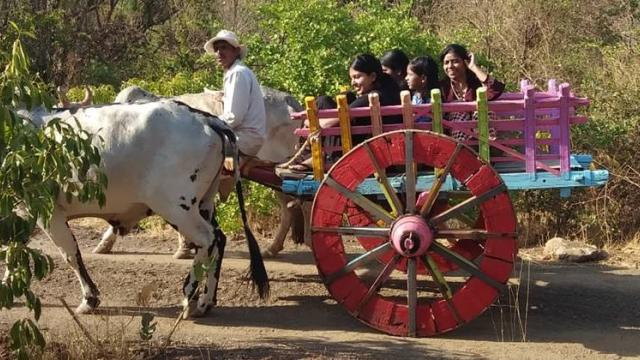 A tour of the area by bullock cart for tourists