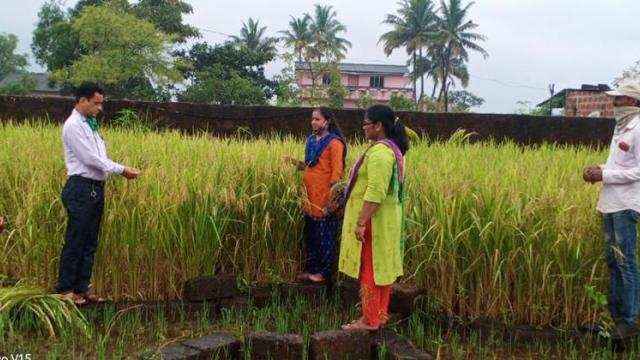 Umed organization officers while inspecting paddy