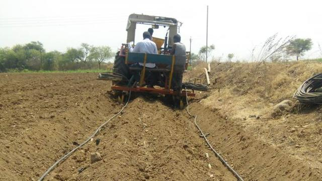 The lateral of the drip is spread with the help of a tractor