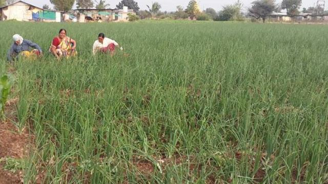 Ratnaprabha Wagh working in farm with his family.