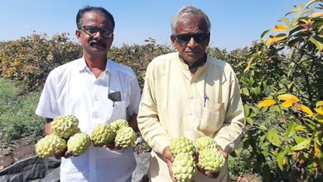 Nilesh and his father Gajendra Shewale showing the quality custard apple